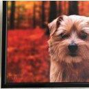 Knietablett - Lap Tray - Norfolk Terrier - Hund