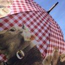 Regenschirm - Stockschirm Kuh Alpin - rot