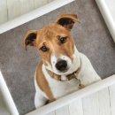 Knietablett - Lap Tray - Sofatablett Jack Russell Hund -...